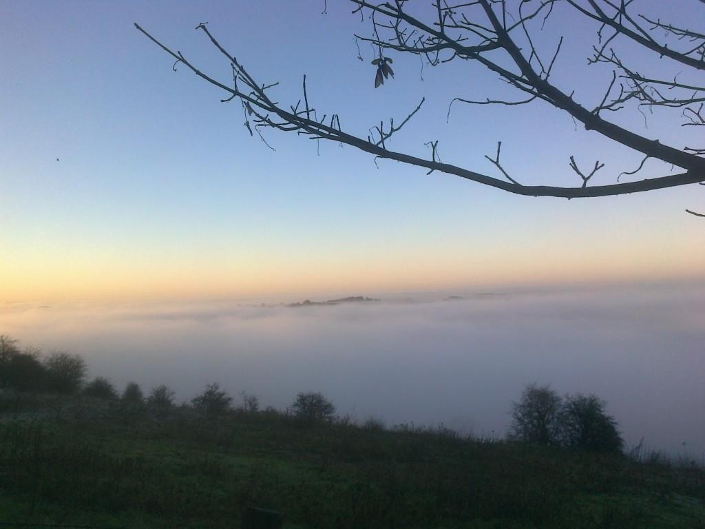 fog-homeward