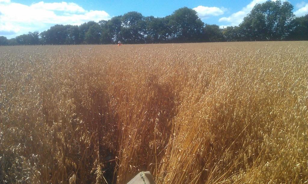 20170720_Barley field 0920